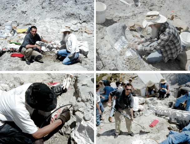 Ausgrabung eines Stegosaurus, 2002