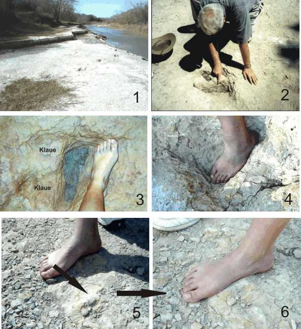 Versteinerte Fußabdrücke im Paluxy-River